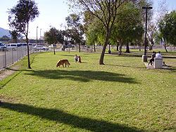 Dog Park Norco Ca